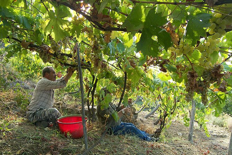 wine tours shore excursions